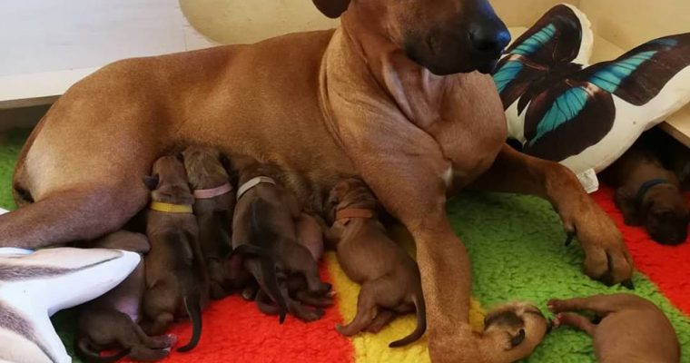 Puppies One week old!